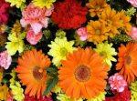 obuchenie-floristike